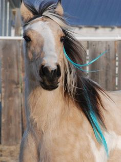 Horses with Long Manes and Tails   Rainbow colored mane and tail extensions