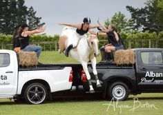 (Seatbelts sold separately.) | Community Post: 6 GIFs Of Horses Jumping Cars