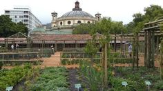 The childrens play area with its fabulous woven playnests by Porky Hefer - Picture of Company's Gardens, Cape Town Central - Tripadvisor Herb Garden, Vegetable Garden, Kids Play Area, Medicinal Herbs, Fruit Trees, Cape Town, Trip Advisor, Taj Mahal, Building