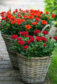 30 Beautiful DIY settings that give color to the garden and make it more appealing Love Rose Flower, Flower Dance, Flower Planters, Flower Pots, Potted Flowers, Make Your Own Story, Gardening Photography, Rosa Rose, Red Cottage
