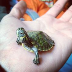 I love turtles, especially the babies!! I wish there were some that stayed tiny!