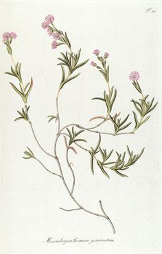 Fragmenta botanica, figuris coloratis illustrata - Biodiversity Heritage Library