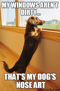 Dirty windows are just a Daschund's nose art!