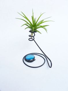 Wire Air Plant Holder