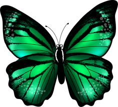 Butterfly effect for vellum? Butterfly Drawing, Butterfly Pictures, Butterfly Painting, Butterfly Wallpaper, Glass Butterfly, Green Butterfly, Butterfly Crafts, Butterfly Design, Butterfly Colors