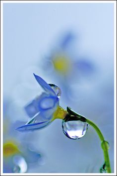 Bokeh photography Amazing nature blue flower water drop