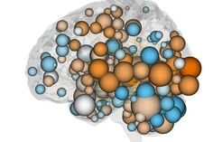 Illustration of a brain with spheres and lines to represent neural networks.