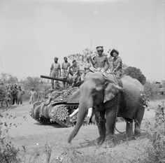 THE BRITISH ARMY IN BURMA The British commander and Indian crew of a Sherman tank of the 9th Royal Deccan Horse, 255th Indian Tank Brigade, encounter a newly liberated elephant on the road to Meiktila, 29 March 1945.1945