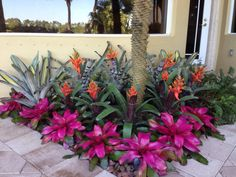 bromeliad garden lots of color gorgeous