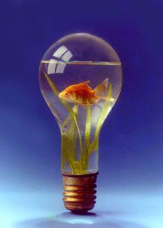 Foto de Peixinho dentro de uma lâmpada - Representa uma ideia....!!!!!