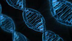 Il gene ARHGAP11B si trova solo nell'uomo, è noto per il suo ruolo nell'espansione della neocorteccia, la porzione del cervello responsabile delle fun...