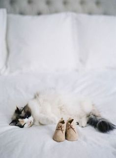 We love baby shoe pregnancy reveals and we LOVE fluffy cats ... so suffice to say that this reveal is one of our favorites. http://thestir.cafemom.com/pregnancy/185707/16_fun_ways_to_include/131279/sweet_kitty/12