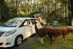 Taman Safari Prigen, Pasuruan, Jawa Timur