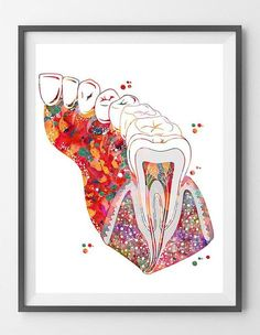 Molar Tooth Section Dental Art Print Anatomy Art Teeth and Gums Molar with Enamel Dentin Pulp Root Medical art Watercolor Dentist Clinic Art - オーラルケアに関するすべて - Everything About Oral Care Dental Office Decor, Dental Office Design, Office Fun, Office Lobby, Office Floor, Dental Surgery, Dental Implants, Dental Hygienist, Dental Wallpaper
