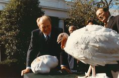 Gerald R. Ford's turn to pardon a turkey at Thanksgiving