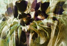Neu in meiner Galerie bei OhMyPrints: Schwarze Tulpen - abstrakte Malerei
