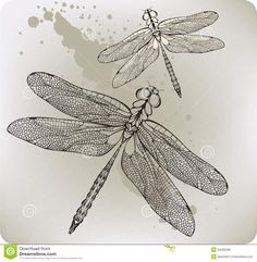 Dragonfly Drawings - Bing Images                                                                                                                                                                                 More