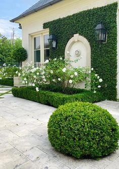 Side Gates, Timeless Beauty, White Roses, Absolutely Gorgeous, Planters, Sidewalk, Bloom, Backyard, Goals