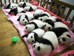 Panda nursery!