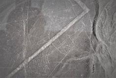 The Whale.  Nazca Lines. Nazca, Peru.  #nazca #nazcalines #peru #whale #desert #travel