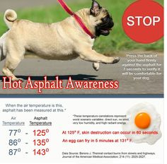 Protecting Paws from Hot Pavement » AdoptaPet.com Blog