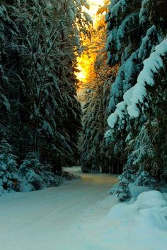 Winter road (Finland) by MilaMai cr.