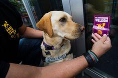 Onwetendheid vaak oorzaak van ontoegankelijke horeca voor geleidehondenbaas