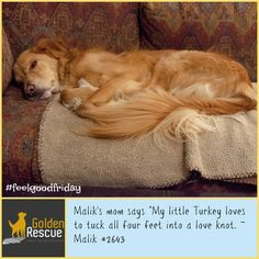 We wonder if Malik is dreaming of summer? #FeelGoodFriday #goldenretriever #secondchance Feel Good Friday, Rescue Dogs, Mercury, Earth, Animals, Summer, Animales, Summer Time, Animaux