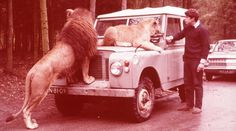 LAND ROVER tranquilize BIG CATS