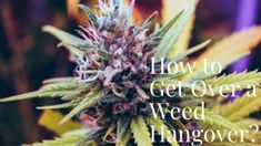Hоw tо Get Ovеr a Weed Hаngоvеr? Weed, Cold Shower, Low Key, Get Over It, Feel Better, Health Benefits
