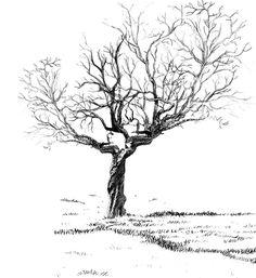 R sultat de recherche d 39 images pour dessin d arbres - Branche arbre dessin ...