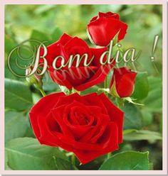 Rosas Vermelhas - Bom dia!