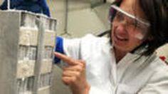 Über Jahrzehnte haben deutsche Forscher Zehntausende #Schimmelpilze und Bakterien zusammengetragen. Der Fundus soll die Suche nach neuen Naturstoffen unterstützen, mit denen sich gefährliche #Krankmacher bekämpfen lassen.