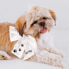 """Super cute dog wearing the """"Best Pet"""" Wedding Bow. She is ready for the big day!"""