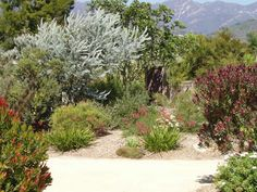 Amazing Australian Native Garden design ides Make the most of our rich native flora and fauna with these Australian native garden design ideas brought to you by Australian Outdoor Living. Bush Garden, Dry Garden, Garden Shrubs, Garden Trees, Rain Garden, Garden Plants, House Plants, Australian Garden Design, Australian Native Garden