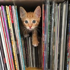 It was only a matter of time before he ended up in the record stacks... #vinyl#recordcollection