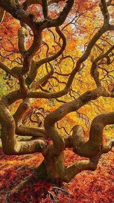 Magnificent #Tree