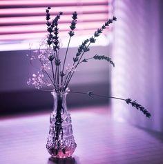 purple bottle with flowers by on deviantART Pastel Purple, Shades Of Purple, Lilac, Purple Haze, Purple Flowers, Still Photography, Tumblr, All Things Purple, Purple Aesthetic