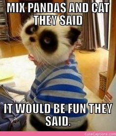 Panda Cat | Cute Captions