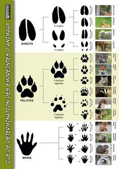 Useful links-Liens utiles Useful links on the hunting of the Club Loup Cervier - Bushcraft Camping, Camping Survival, Survival Prepping, Survival Skills, Animal Footprints, Survival Knots, Survival Life Hacks, Animal Tracks, Forest School