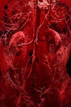 Eco Design, Medical Wallpaper, Biology Art, Brain Art, Human Body Anatomy, Still Life Images, Human Body Systems, Medical Anatomy, Circulatory System