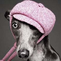One of my all time favourite LoveMyDog shoots is this one by Rankin world famous #photographer from Kate Moss Rolling Stones to the Queen Rankin's wife model Tuuli Shipster a #doglover & proud owner of this beautiful #whippet Beans who Rankin photographed along with LMD's studio muse Rabbit #Beansiswearing Pixley #harristweed #bakerboy #doghat designed by Lilly #caninecouture #designerdog #whippetsofinstagram #dogsofinstagram #dogs_of_instagram #dogselfie #dogoftheday #poshdog #dogstagram…