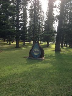 Dole Park, in the midst of the Cook Island Pine trees. Lanai Island, Romantic Woman, Whale Watching, Cook Islands, Wedding Bells, Maui, Pine, Trees, Pine Tree