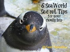Six tips you probably didn't know that will make your trip to SeaWorld awesome via @FieldTripswSue