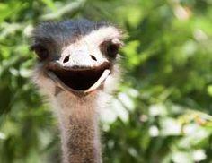 Laughing Animals - olegkozyrev/Getty Images