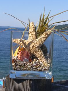 BEACH DECOR SEASHELL arrangement, permanent, starfish, nautical decor. $56.00, via Etsy.
