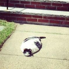 You know it's hot when your cat melts
