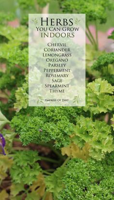 Herbs you can grow indoors and how to get started in growing food indoors all year round! #ad