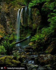 #Repost @beautyinspyglass_  An old favourite!  Hopetoun Falls in the Great Otway National Park #scenery #nature #exploring #victoria #seeaustralia #otways #nationalpark #australia #photography #waterfall #green #longexposure #australiagram #forest #rainforest #instanature #nikon #nikon_photography #nikonlens #landscape #beautiful #wanderlust #roadtrip #amateurphotography #river #creek #magic #apollobay #greatoceanroad #longexposure by emmgracex