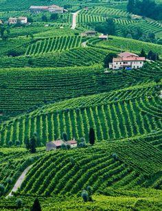 Prosecco vineyards in Valdobbiadene, Italy